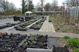 Kwekerij Marnis te Schimmert - voorjaar